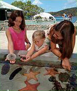 Coral World St Thomas Children Vacation Activities