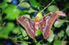 Butterfly World on St Thomas Children Vacation Activities