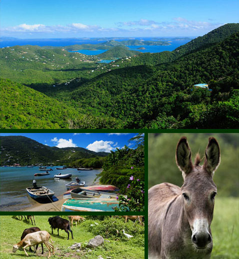 Coral Bay, Boats and Donkeys